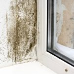 mold-by-window negative effects of humidity on your home